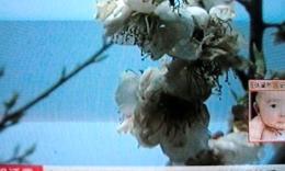 安徽卫视:夏传寿等诗友参观和县半枝梅
