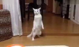 听到要吃,饭垂眉猫站起来倒退逃走了