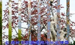 红棉树下 国语版