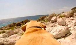 一只超爱游泳的狗狗